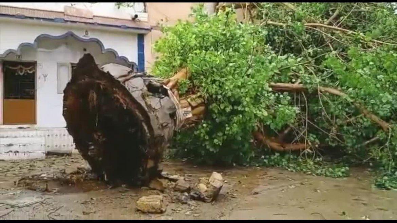 चक्रवात: गुजरात ने फलों के उखड़े 30 फीसदी पेड़ों को दोबारा लगाने की योजना