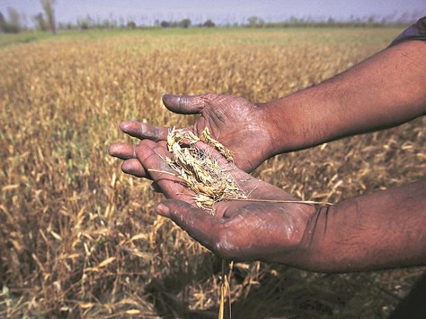 दूर होगी किसानों की नाराजगी? गेहूं और सरसों समेत 6 फसलों की MSP बढ़ी